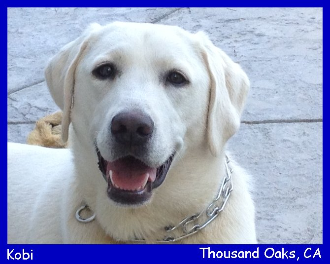 white lab puppies for sale in california