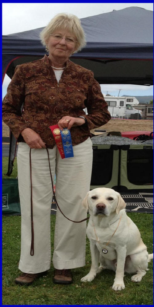 labs to love AKC titled white lab puppies, champion sired lab puppies