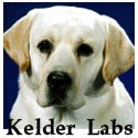 yellow lab pups, male labrador puppy, female lab puppies